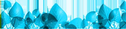 feuilles d'arbres bleues